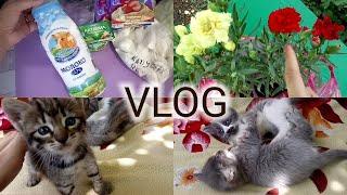 VLOG /Покупки продуктов  /Наши котята/ Купила гвоздику