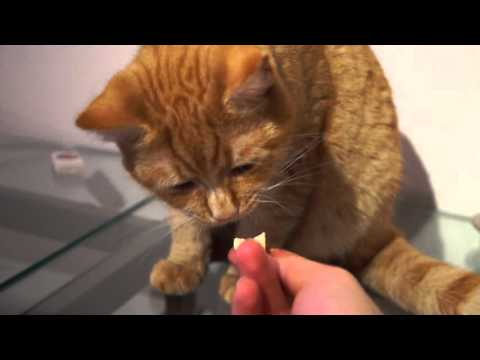 Cat lick the butter