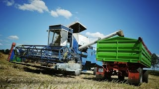 Żniwa rzepakowe 2013 [Full HD] Bizon Z056 & Fortschritt MDW 514 // Deutz-Fahr // New Holland