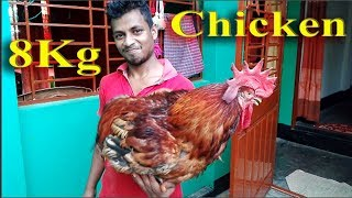 Very big 6 Kg big chicken prepared by my village Kids Local chicken Cutting Process