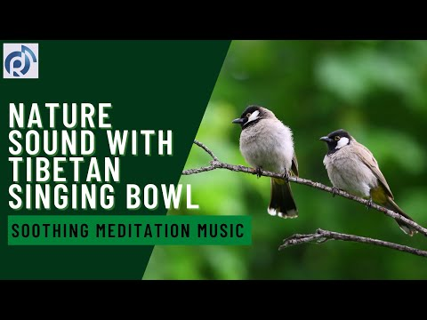 Soothing Meditation Music | Birds in the Rain | Nature Sound with Tibetan Singing Bowl - Relax Music