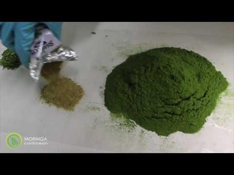 Quality of Moringa