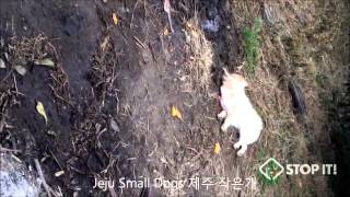 Shocking Cruelty of South Korean Dog Meat Industry Part 2 of 2