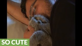 Affectionate cat purrs and cuddles with his owner