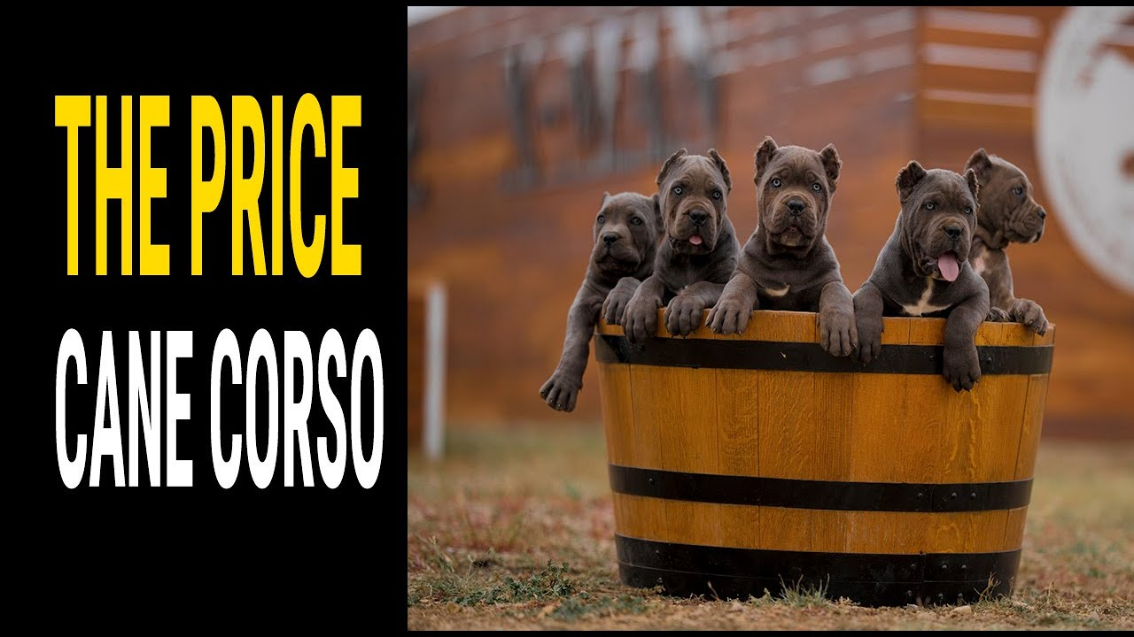 dvejetainiai variantai sarginiai šunys 24 7 opcionų prekyba