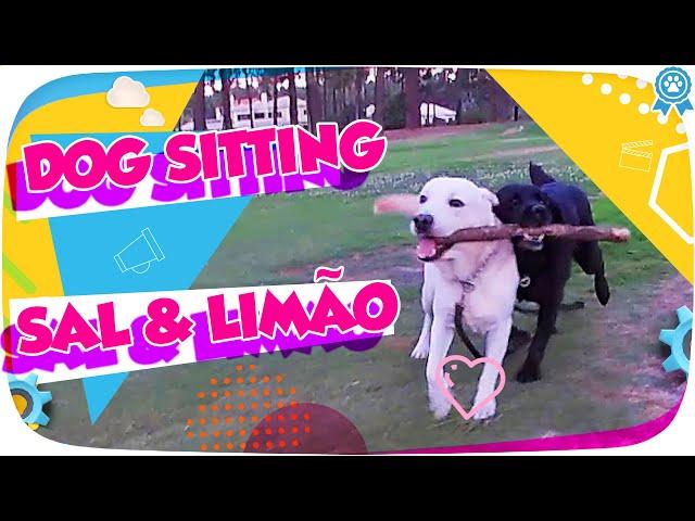 Sal e Limão - Busca em dog sitting