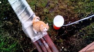 Умный кот!!! Маркиз, домой!!!