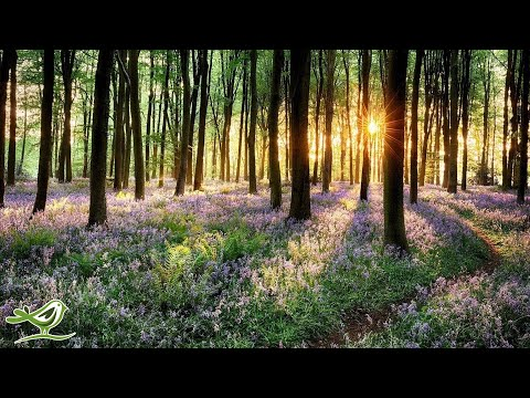 Relaxing Piano Music: Meditation Music, Sleep Music, Spa Music, Study Music, Relaxing Music ★97