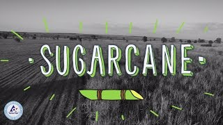 Bio-Based Plastic Made from Sugarcane