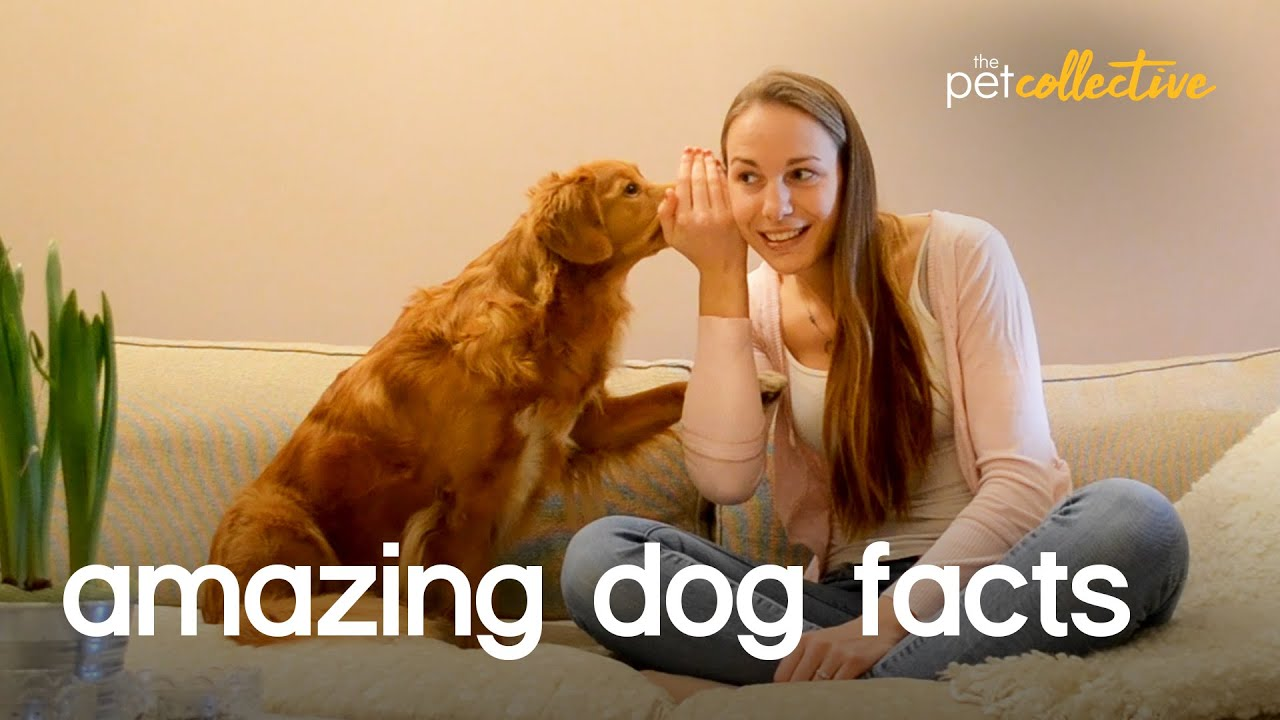 Amazing Pet Facts: DOGS