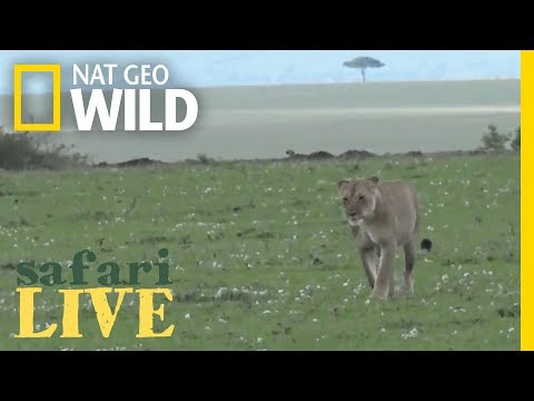 Safari Live - Day 52 | Nat Geo WILD