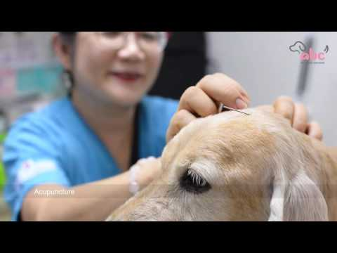 All 'Bout Canines - Traditional Chinese Veterinary Medicine (TCVM) Seminar by Dr. Tai Yesun