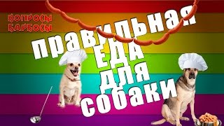 Опасная и Полезная еда для собак!!!!