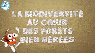 Tetra Pak dibujos animados - la biodiversidad en el corazón de bosques bien gestionados