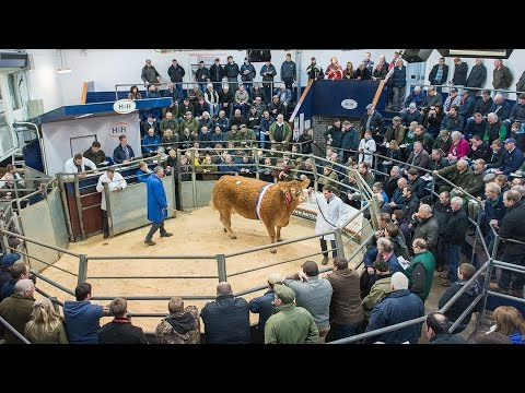 Limousin Red Ladies Derby & Weaned Calf Show and Sale - 11th December 2015