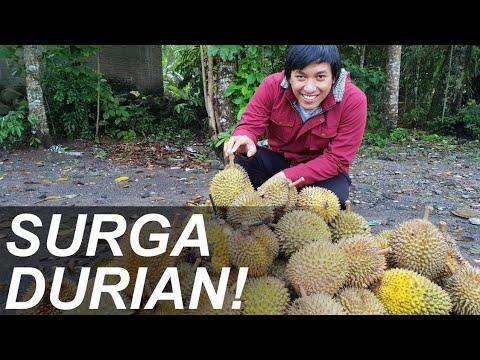 INDONESIA HIDDEN DUREN PARADISE