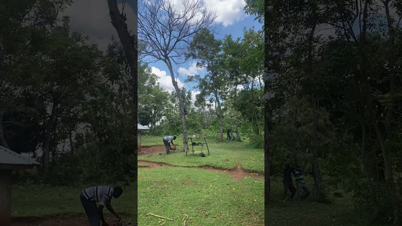 Download Power saw : Professional tree felling in Gem Kathomo, Siaya County, Kenya