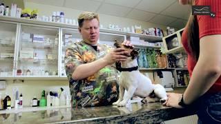 Pies u weterynarza – jak przebiega badanie profilaktyczne psa