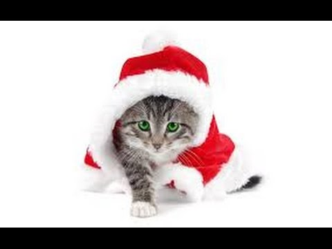 merry christmas cat compilation - Merry Christmas Cat