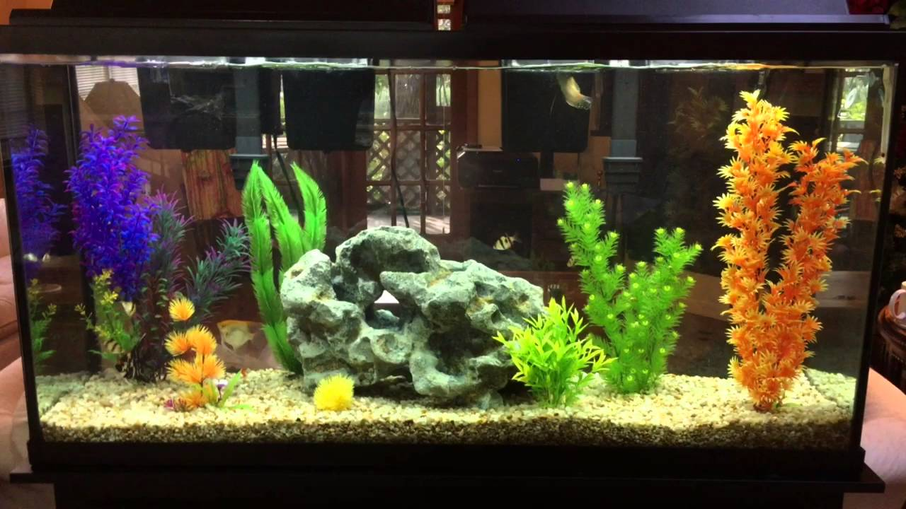60 gallon fish tank review part 1 youtube for Fish tank review
