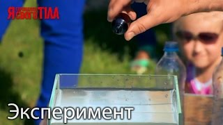 Эксперимент с гомеопатическими препаратами