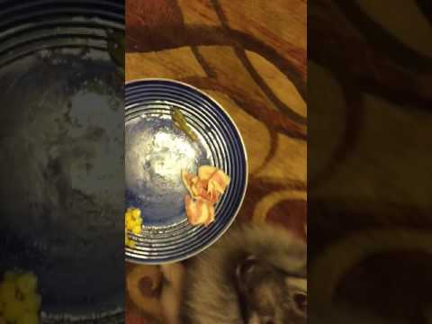 Food test with my dog Josey