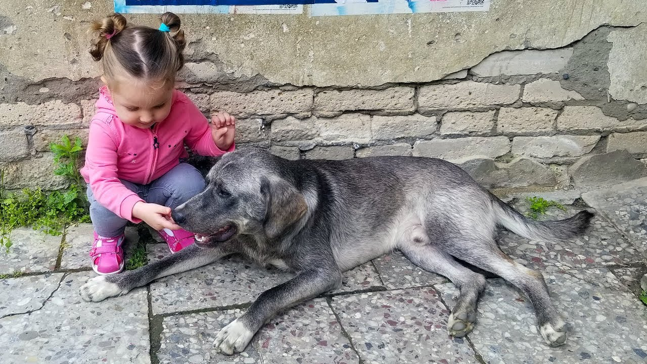 CUTE KID Meets Friendly Dog - Toddler Lile wants to Play with Dog