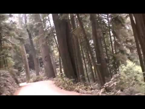 Redwood Trees a brief Drive Jedediah Smith St Park California