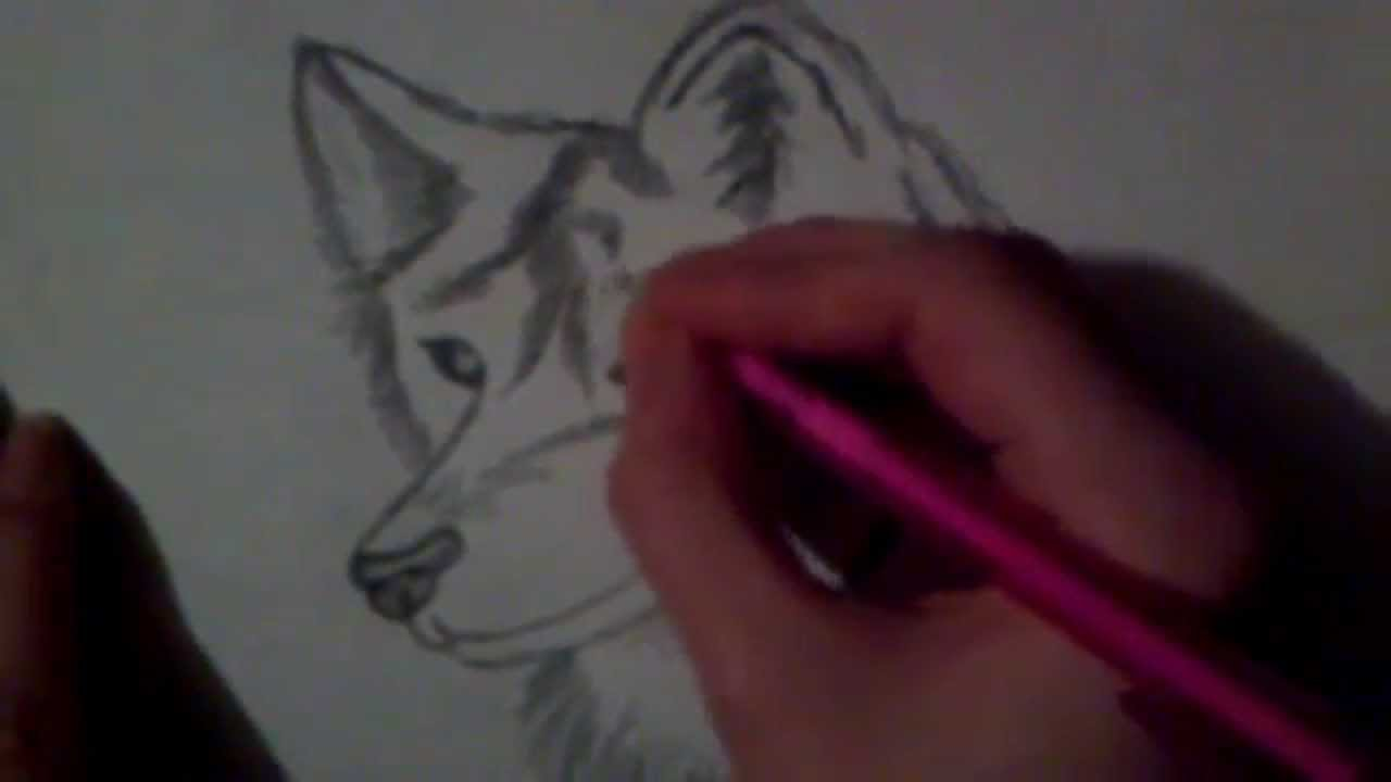How to draw a wolf step by step youtube ccuart Choice Image