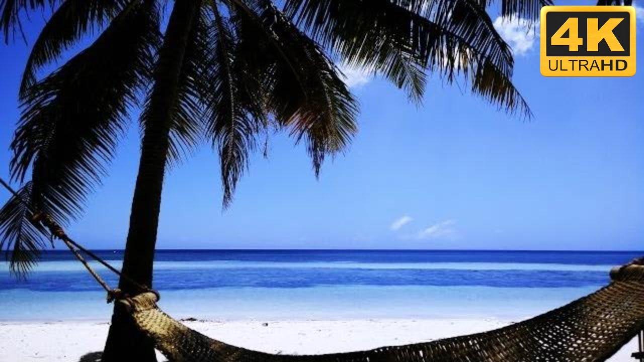 Beach Screensaver Paradise Beach Scene with Hammock