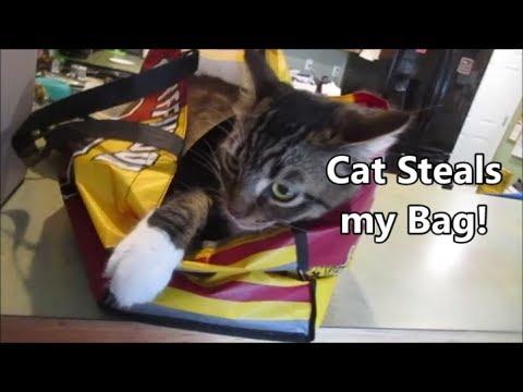 CAT STEALS MY BAG!