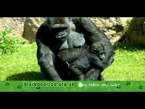Blackpool Zoo 2013 TV Advert