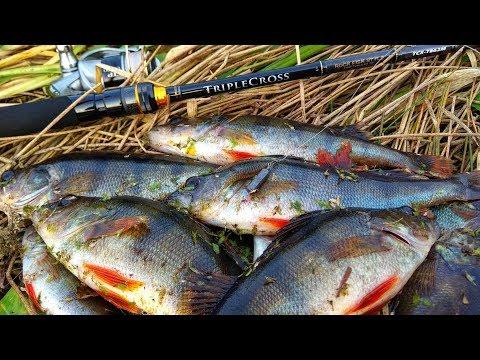 Джиг Риг и Танта — УБОЙНОЕ СОЧЕТАНИЕ! Ловля окуня на спиннинг Рыбалка осенью