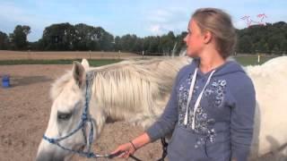 Kinder-Reit-Camp Fluidum : Die Steckbriefe der Pferde