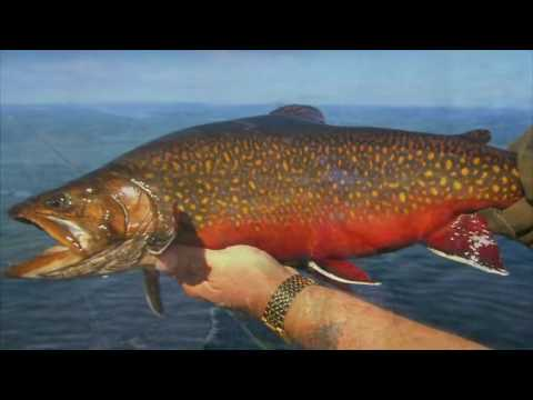 A Fly Fishing Journey Through Labrador
