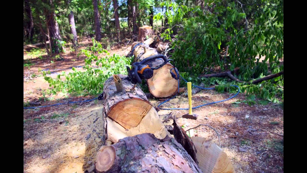 Log Planters From Dead Tree Youtube