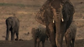 Exhausted Baby Elephant Struggles To Survive | The Long Walk Home | BBC Earth