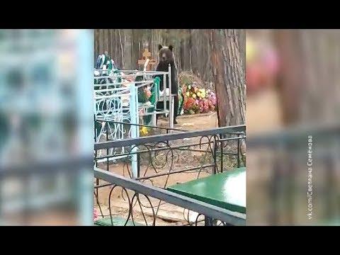 Медведь на кладбище в Сатке