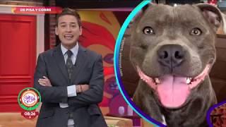 ¡Dos mujeres se robaron los platos de un perrito!   Sale el Sol