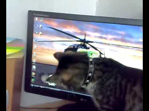 Crysis Crack By Razor And My Cat