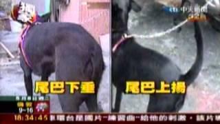 社團法人 高雄市關懷流浪動物協會 thumbnail