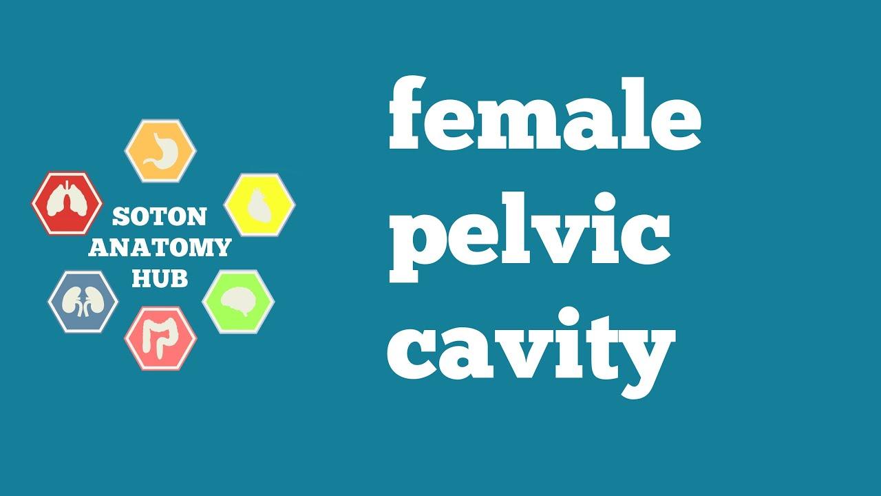 Female Pelvic Cavity Anatomy Youtube