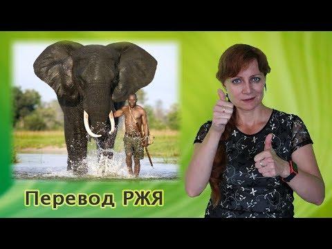 Как слоны помогают