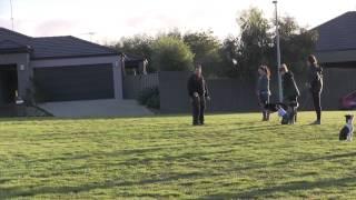 Paul The Dog Trainer - Agility And Social Class Geelong