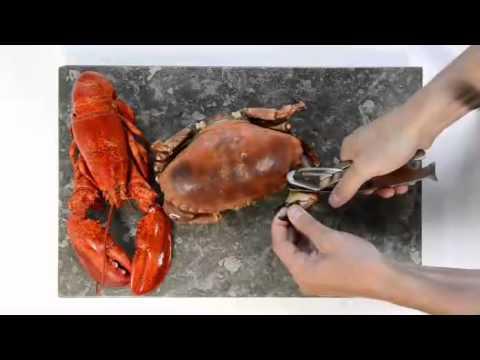 Pince À Crustacés pince à crustacés caretta - youtube