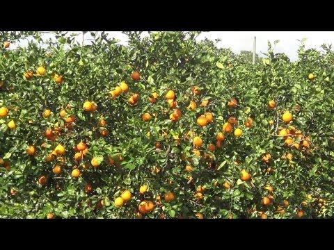 Orange Grove in Florida - REAL USA Ep. 28