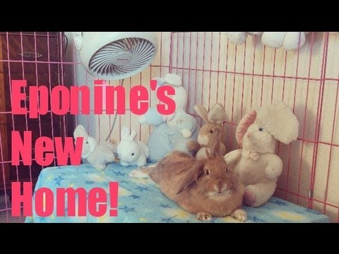 BUNNY PLAY PEN & CAGE TOUR!
