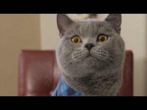Aaron's Animal Vine 1 Hour Special Compilation 2017