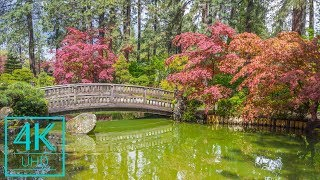 Parks & Gardens - 4K TV Wallpapers Slideshow for Lounges, Office Rooms, Lobbies - 3 HRS (NO SOUNDS)