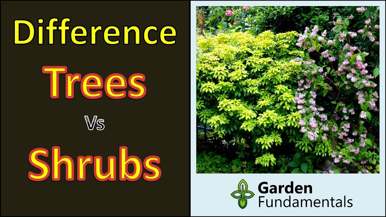Trees And Shrubs Difference Between Trees And Shrubs And Subshrubs